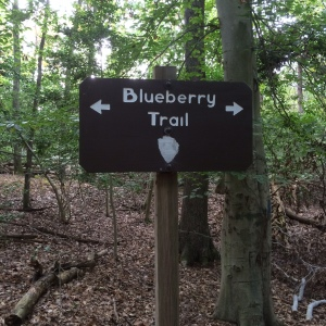 blueberry sign
