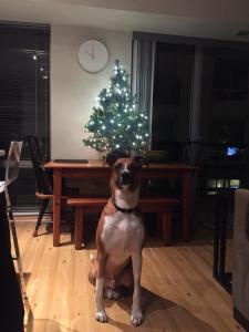 Dewey didn't make the reindeer cut