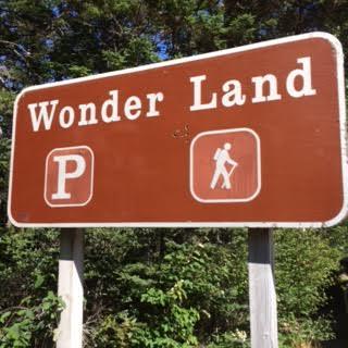 11 wonder land