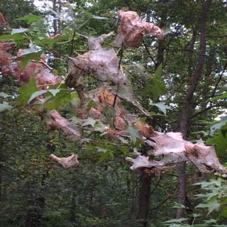 16 tree nests