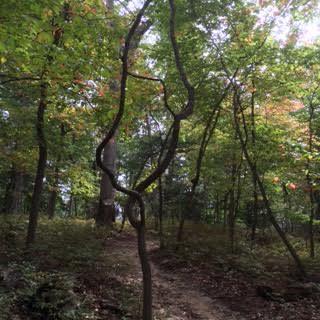 18 tree